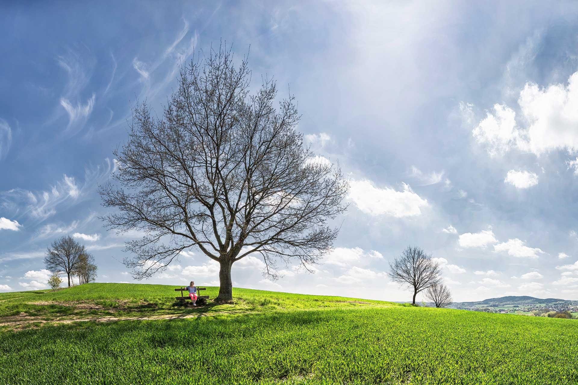 Relaunch Start Baum in Landschaft